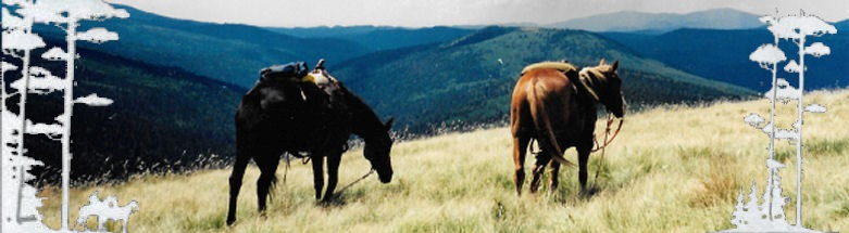 Los Pinos Guest Ranch Trail Riding in Pecos Wilderness